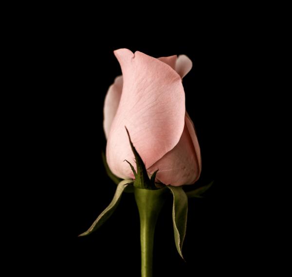 Flowers 8 • Test Articolo Maglia •